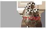 Mosi IT Dev Team